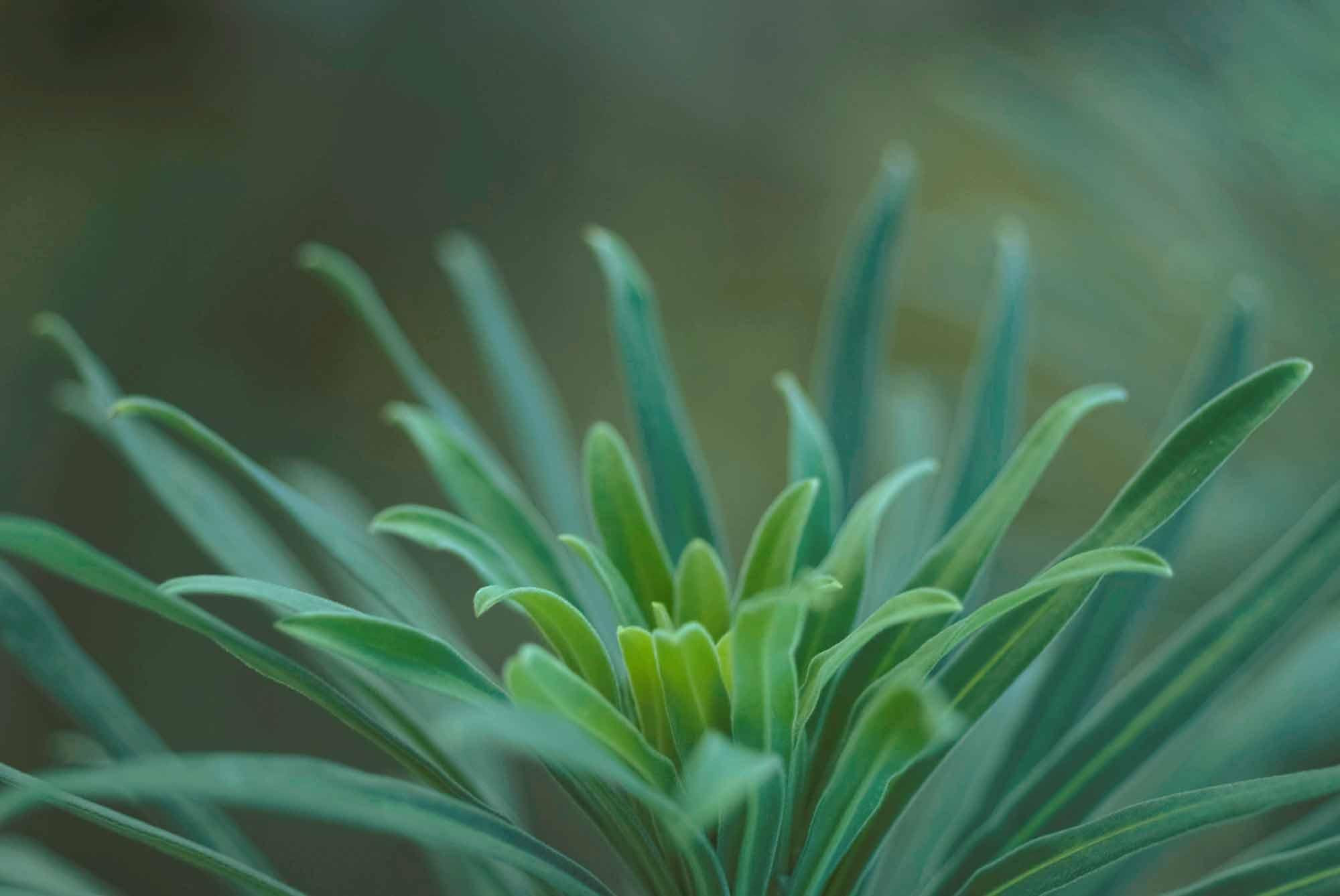 abri-lilin-hally-kirsten-mcateer-portland-psychotherapy-rodbt-4